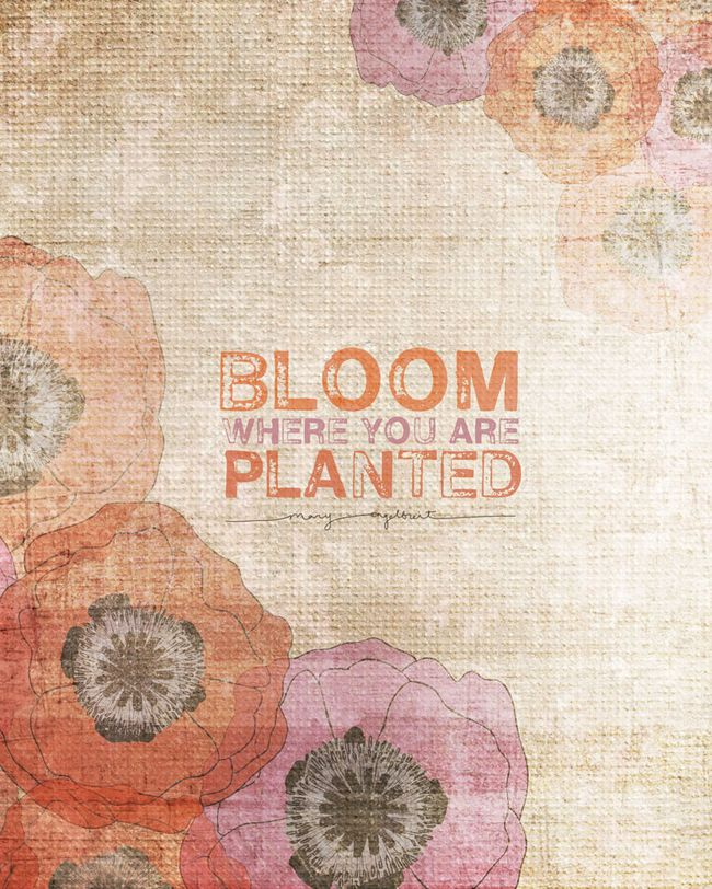BLOOM WHERE YOU ARE PLANTED WEB