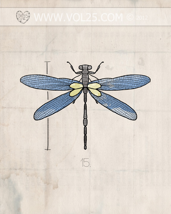 VOL25 INSECT SERIES DRAGONFLY