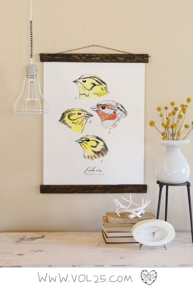 VINTAGE SCIENCE POSTER EMBERIZA 2 BY VOL25
