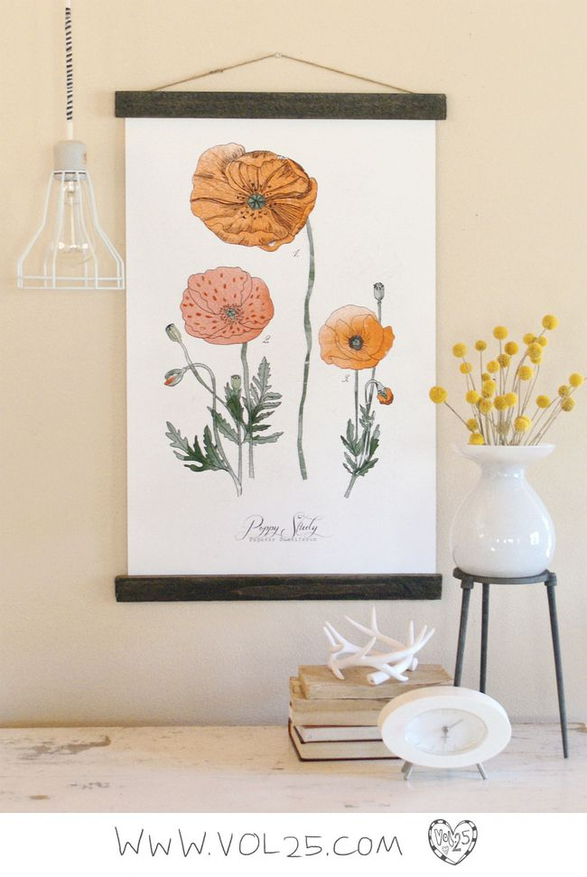 VINTAGE SCIENCE POSTER POPPY BY VOL25