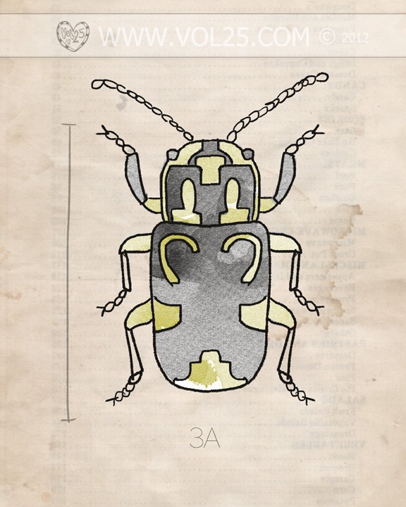 VOL25 INSECT SERIES BEETLE