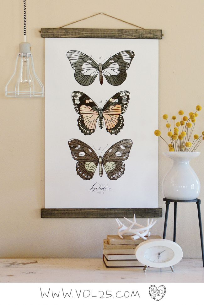 VINTAGE SCIENCE POSTER LEPIDOPTERA BY VOL25