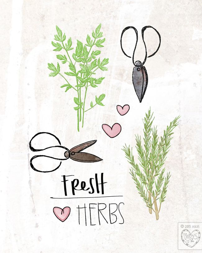 Fresh Herbs by VOL25