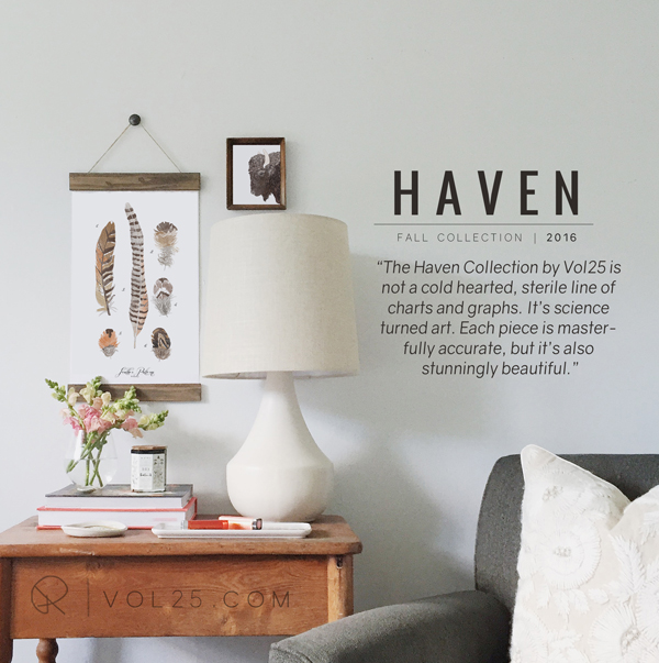 HAVEN COLLECTION2